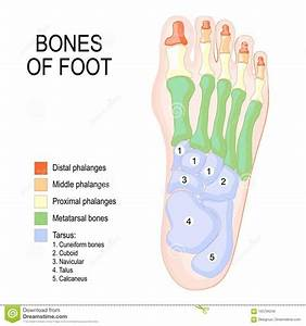 Foot Cartoons  Illustrations  U0026 Vector Stock Images