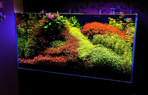 Japanese Aquascape Artist by What S Your Aquascape Style Cflas