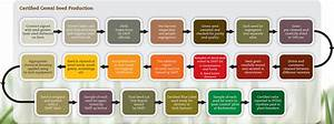 Production Process of Certified Seed - Irish Seed Trade ...