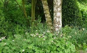 Welche Pflanzen Vertragen Sich Tabelle : die besten 17 ideen zu schattengarten auf pinterest ~ Lizthompson.info Haus und Dekorationen