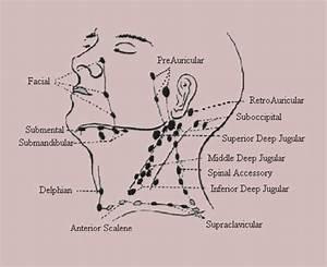 35 Neck Lymph Nodes Diagram