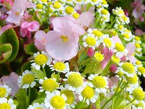 Free Spring Flowers Wallpapers - Wallpaper Cave