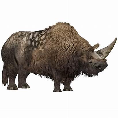 Elasmotherium Tundra Animals Zt2 Extinct Fossil Wikia