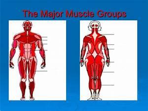 Human Body Anatomy Quizlet