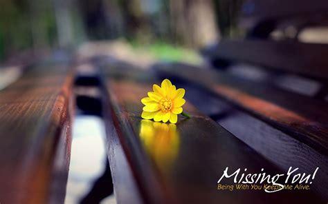 pics wallpaper  flower