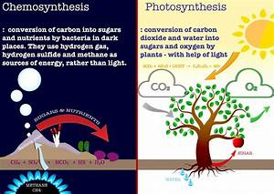 Chemosynthesis Vs  Photosynthesis  Image