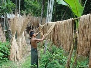 Mozahedul Islam's blog: Jute The golden fiber of Bangladesh
