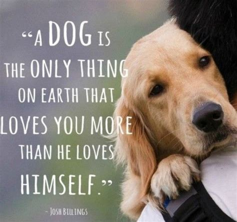 Dog Lover Meme - 12 facts labradors lovers must never forget the last one