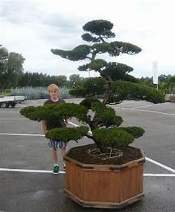 fruhjahrsputz im heimischen garten mit dem richtigen With garten planen mit bonsai eiche