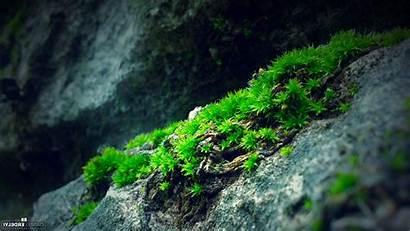 Nature Moss Rock Backgrounds Desktop Wallpapers Screen