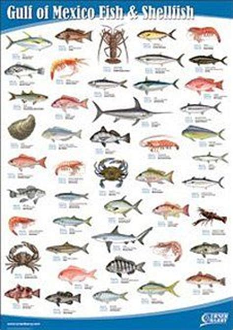fish chart  gulf  mexico google search fish chart