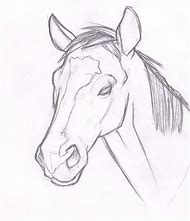 Horse Head Drawings Realistic