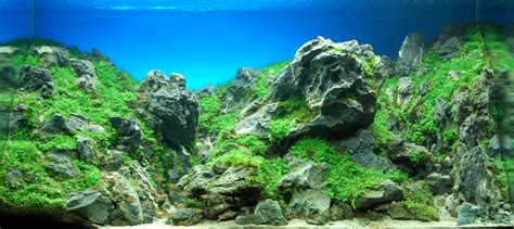 Aquascaping World by The International Aquatic Plants Layout Contest 2009