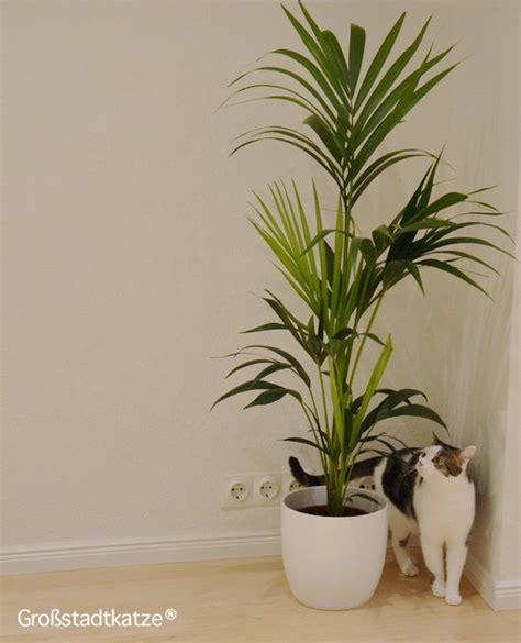 Giftige Zimmerpflanzen Für Katzen by Ungiftige Zimmerpflanzen F 252 R Katzen Ungifte Pflanzen