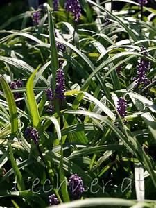 Welche Blumen Blühen Im Oktober : pflanzen ~ Bigdaddyawards.com Haus und Dekorationen