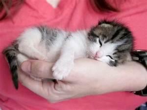 sleepy kitten | I smile. | Pinterest