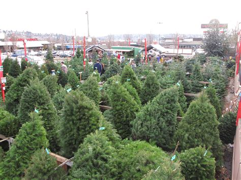 boy scouts to start selling christmas trees this weekend
