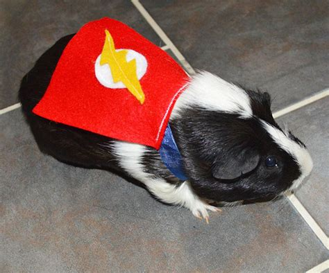 superhero pet costumes nuff  mightymega