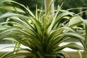 Grünpflanzen Im Topf : typische pflanzen im topf ~ Michelbontemps.com Haus und Dekorationen