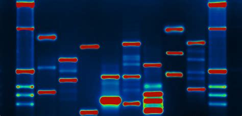 interesting  human genome project   chromosomes