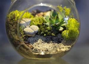 Acheter Terrarium Plante : vivarium wikipedia ~ Teatrodelosmanantiales.com Idées de Décoration