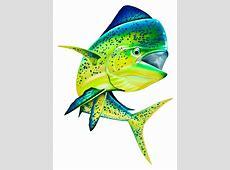 Full Color Decals Fishing Decals Mahi Mahi Color Decal