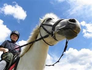 Wie Heizt Man Richtig : wie reitet man richtig was tun wenn mein pferd buckelt ~ Markanthonyermac.com Haus und Dekorationen