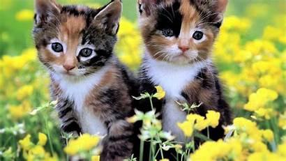 Desktop Cat Wallpapers Kitten 3d 4k Netbook