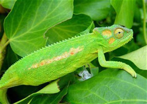 lista de animales insectivoros nombres  ejemplos