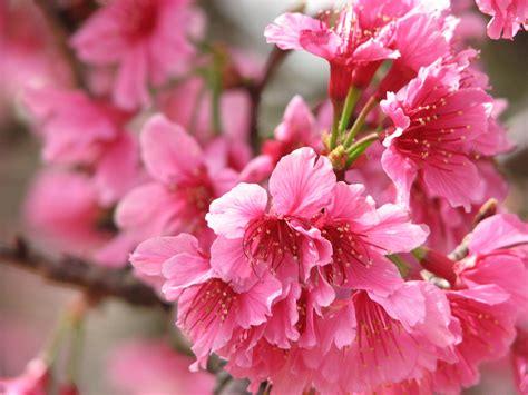 fondos de pantalla floracion de arboles en gran plano