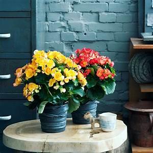 customiser un pot de fleurs avec une chambre a air marie With tapis chambre bébé avec pot de fleur exterieure