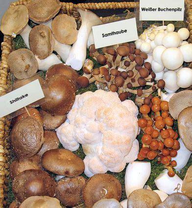 spardose nicht zu öffnen darf gulasch mit pilzen aufw 228 rmen die fleischerei