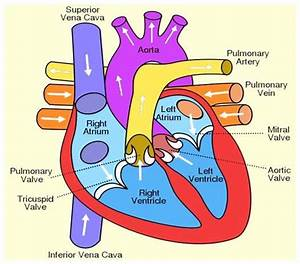 Heart Easy Diagram