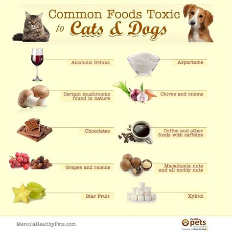 common foods toxic  cats  dogs helpful animal pet