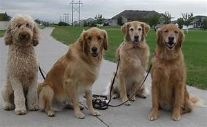 how to start a dog walking business be a successful dog With dog sitting companies
