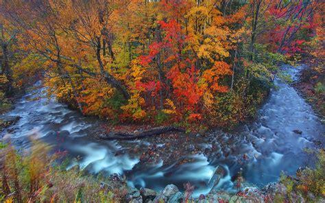 autumn forest wild stream wallpapers autumn forest
