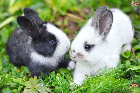 Rabbit Images Different Methods Of Rabbit Communication Pets4homes