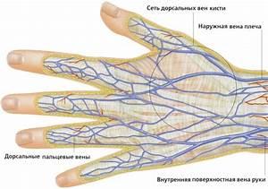 Кедровые орешки лечение гипертонии