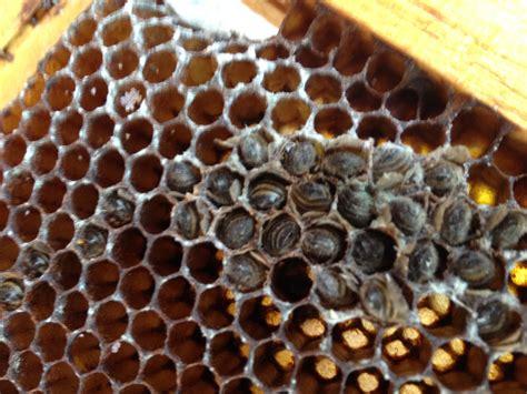 My Blog Of Beekeeping Blunders