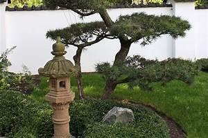 aisa und japan garten native plants With französischer balkon mit wacholder im garten