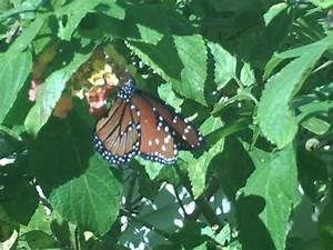 Butterfly garden harry p leu gardens picture of for Butterfly garden orlando