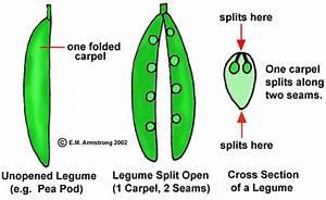 Fruit Terminology  Part 1
