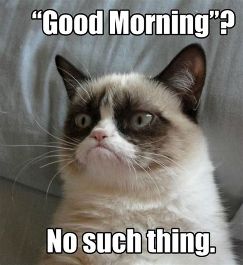 Grumpy Cat Good Morning Meme - 5 am worst time of the day runnah girl