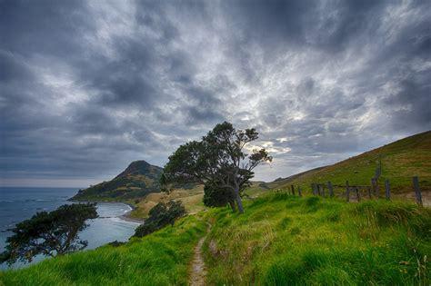 Free Photo New Zealand Path Trail Free Image On