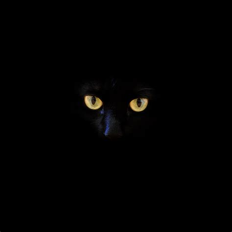 Phone Wallpaper Black Cat by Wallpapers With True Black 37 Best Free Black Wallpaper