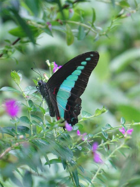 Garten Pflanzen Schmetterlinge by Schmetterlinge Anlocken Ayumis Garden