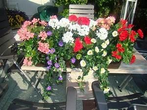 Künstliche Blumen Für Balkonkästen : balkonpflanzen 8 im kasten ~ A.2002-acura-tl-radio.info Haus und Dekorationen