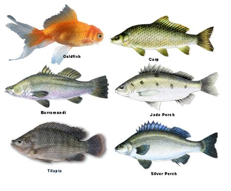 fish prawns endless food factory