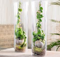 Pianta da appartamento quale scegliere idee green