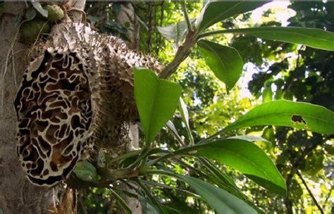 tanaman langka hidup indonesia